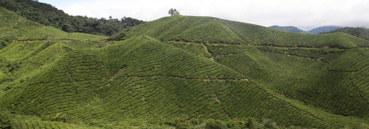 Tee Hochland Malaysia